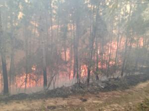 incendio valle nuevo 2