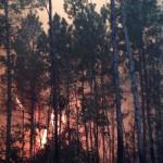 incendio valle nuevo3